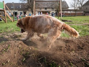 How to Stop Dog Digging up Plants