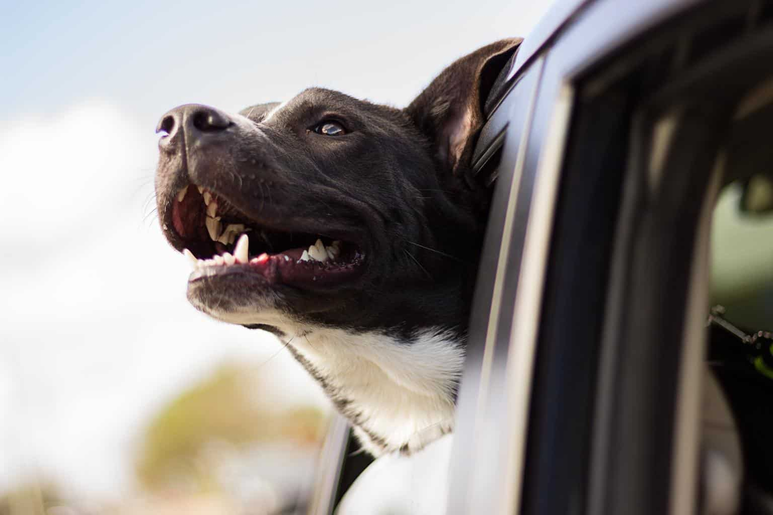 critical signs of stress in dogs