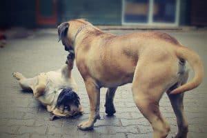 Stop Barking Dog In The Neighborhood Naturally