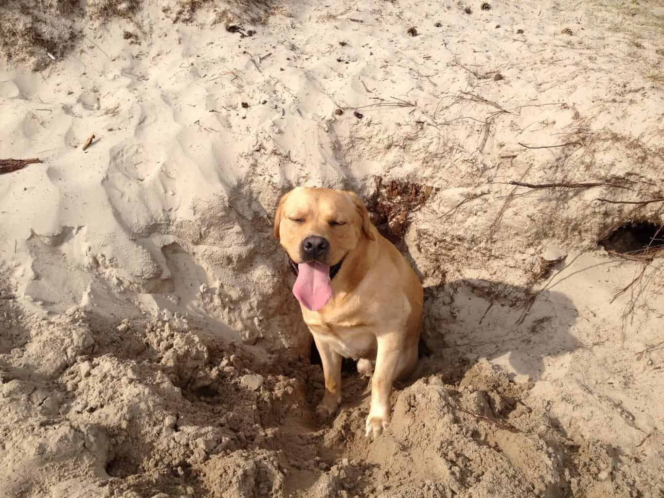 Why is my dog digging holes all of a sudden?