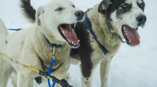 Remove term: How to Stop a Dog From Nipping When Excited How to Stop a Dog From Nipping When Excited