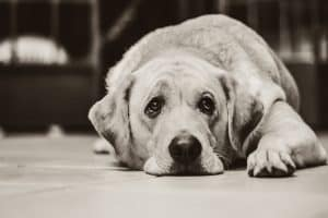 How To Calm An Anxious Dog