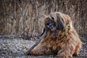 How To Get Rid Of Ticks On Dogs