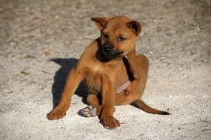 cure dogs itchy and sensitive skin