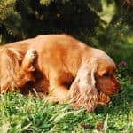 Stop Dog From Digging Home Remedy