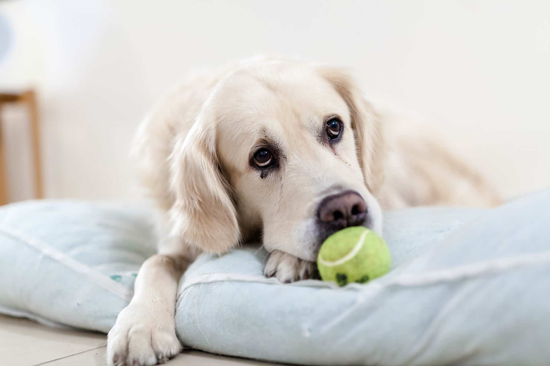 impulse control for dogs