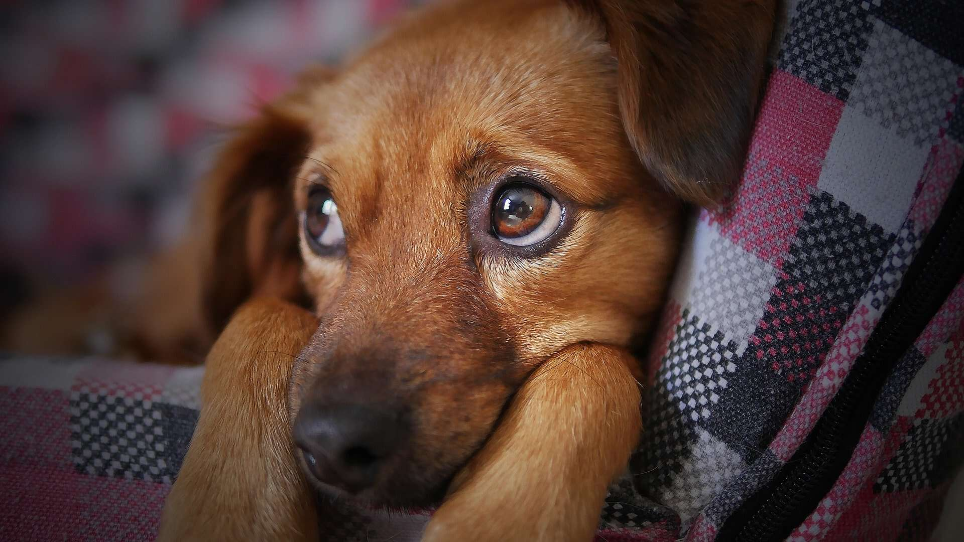 How to Potty Train a Dog if you Work