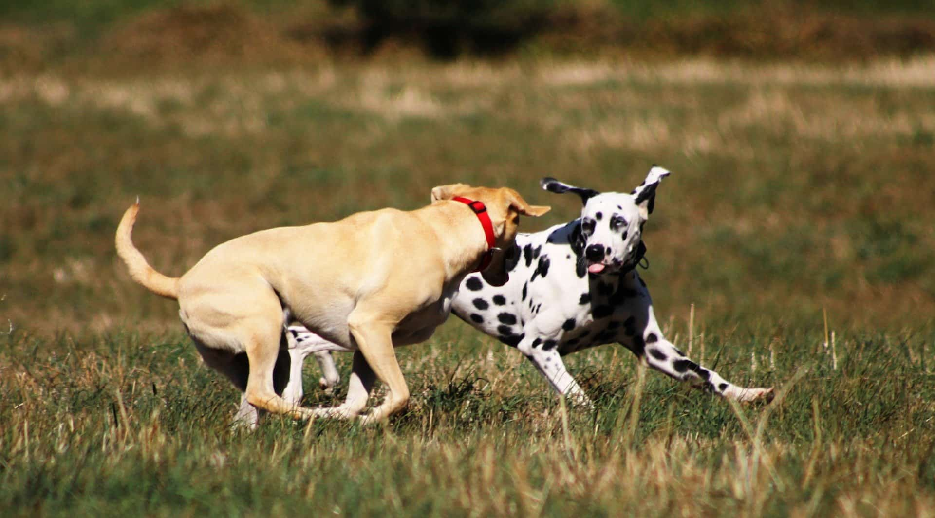 impulse control aggression in dogs