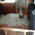 dog chewing furniture when left alone