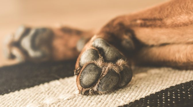 Dog itchy paws home remedy