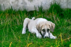 How Do I Stop My Rescue Dog From Pooping in the House