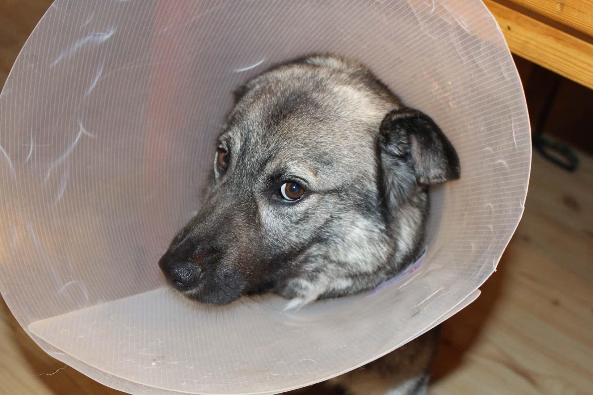 Dog Flea and Tick Prevention