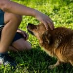 How to Potty Train a Dog Fast and Easy