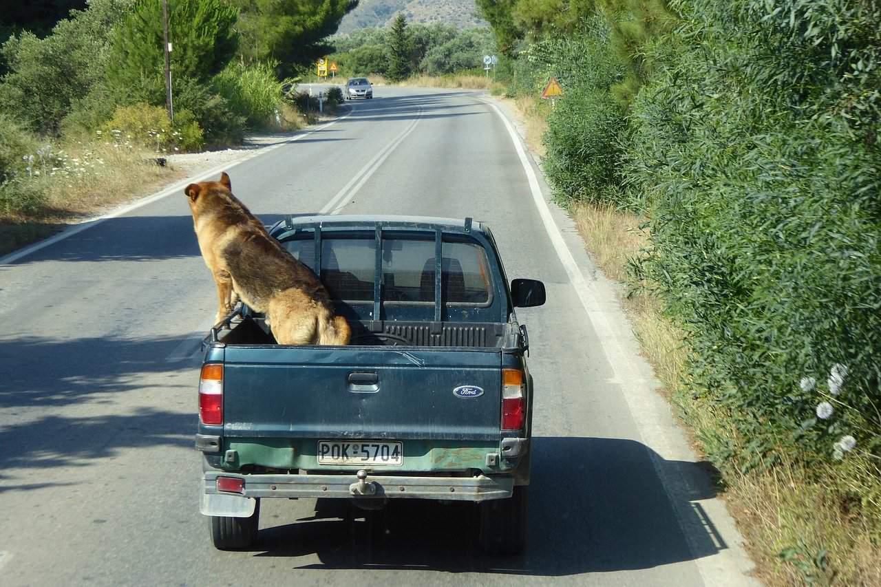 stop dog chasing cars