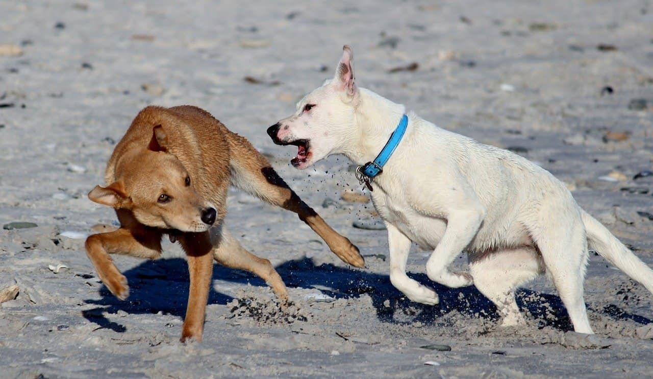 Remove term: How to get a dog to stop nipping How to get a dog to stop nipping