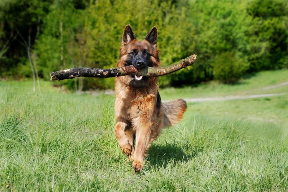 Barking Dog Problem