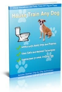 How to Potty Train a Dog Living in an Apartment