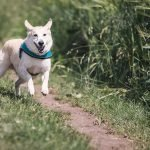Dog Barking and Pulling on Leash at Other Dogs