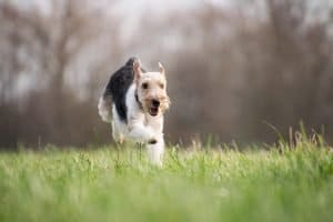 Why Does My Dog Keep Running Away from Home?
