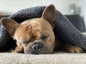 Managing Dementia In Dogs