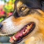 What to Do When You See Your Dog Drooling Excessively From One Side of the Mouth