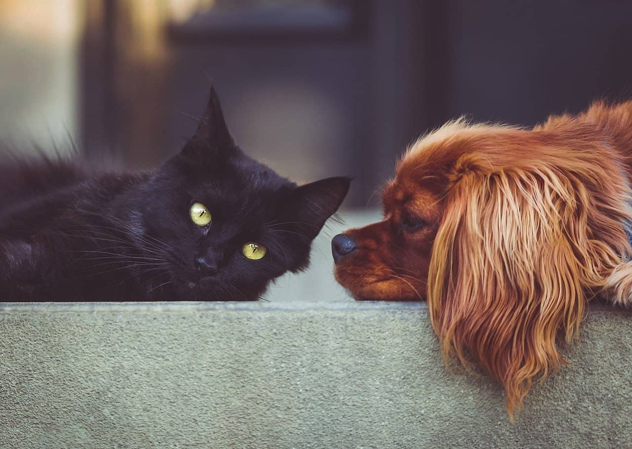 How Smart Are Dogs Compared to Cats