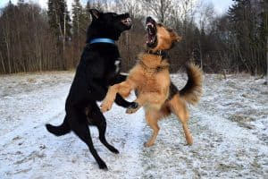 How to Stop a Dog Attacking Another Dog.