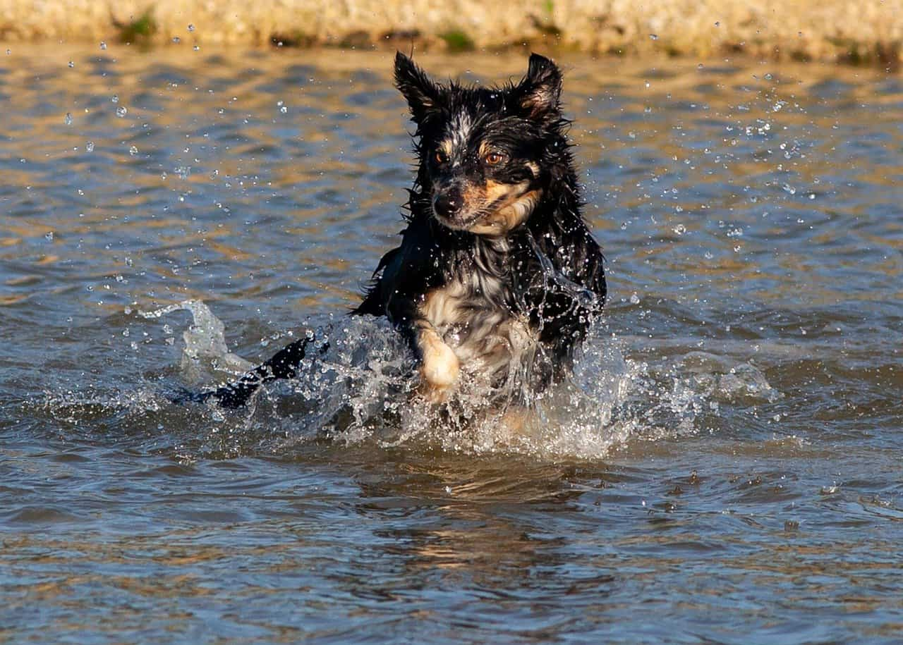 Are Ponds Safe for Dogs? — Bodies of Water to Avoid