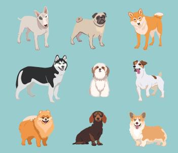 23.Autres chiens