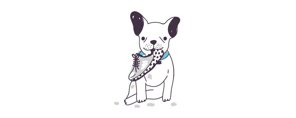 8.Pourquoi mon chien mâche-t-il excessivement des choses