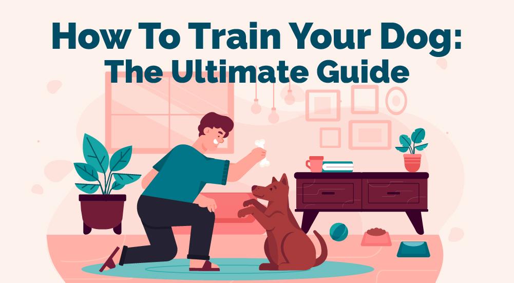 Comment dresser votre chien Le guide ultime