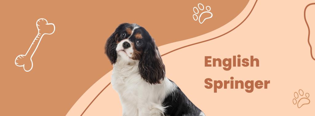 Spaniels (English Springer)