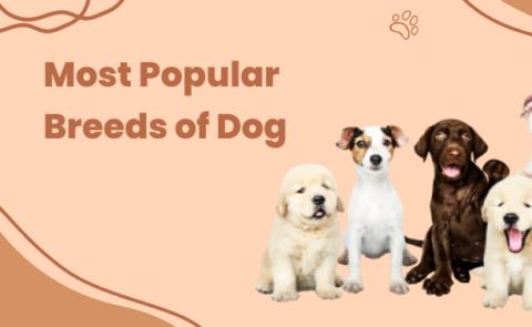 Most Poplar Breeds of Dog