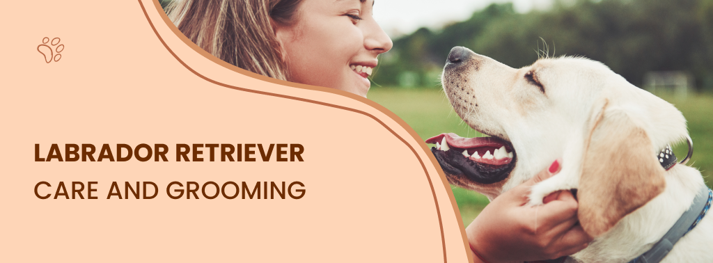 Everything About Labrador Retrievers - The Most Popular Dog Breed